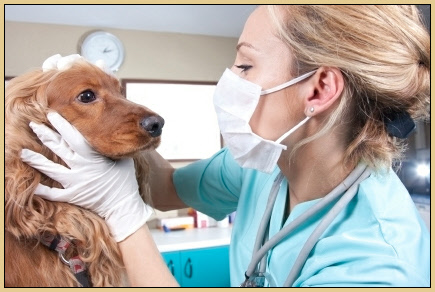Pet Clinic – Dịch vụ khám chữa bệnh chó mèo