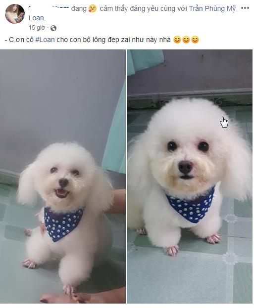 Spa Grooming Cắt tỉa lông và làm đẹp chó mèo Pet Nha Trang