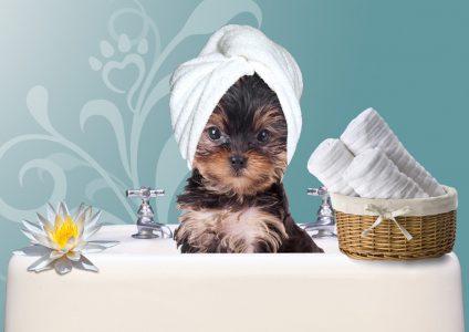 Pet nha trang Tắm - cắt tỉa lông chó - Spa và Grooming