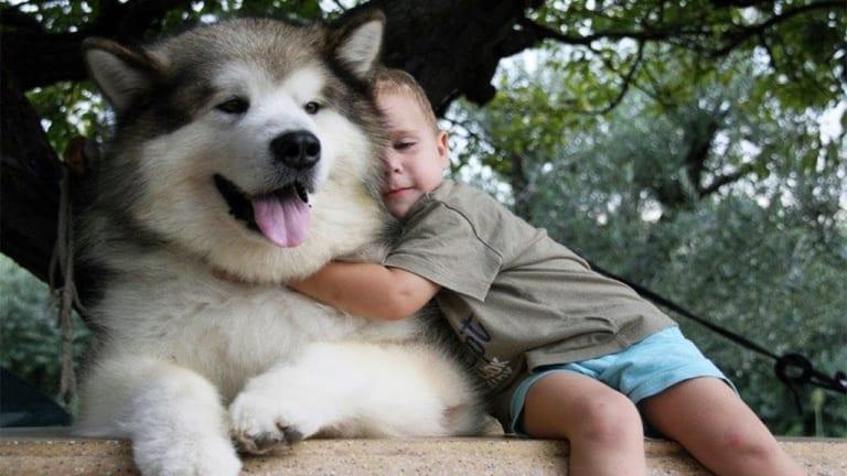 5 giống chó đẹp và dễ thương nhất