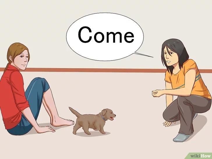 Cách để Huấn luyện chó con Pet Nha Trang
