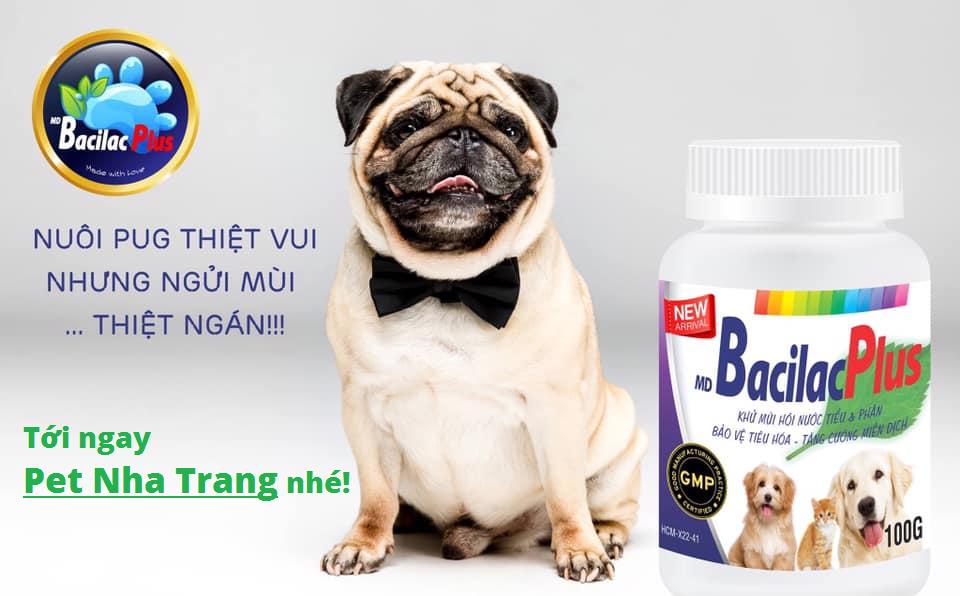 Bacilas Plus khử mùi hôi nước tiểu và phân cho chó mèo Pet Nha Trang