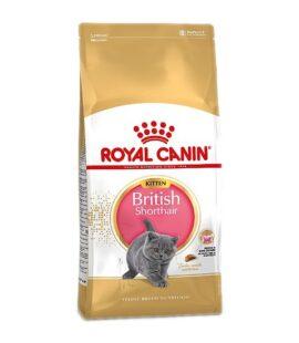 Thức Ăn Mèo Royal Canin British Shorthair Kitten Pet Nha Trang