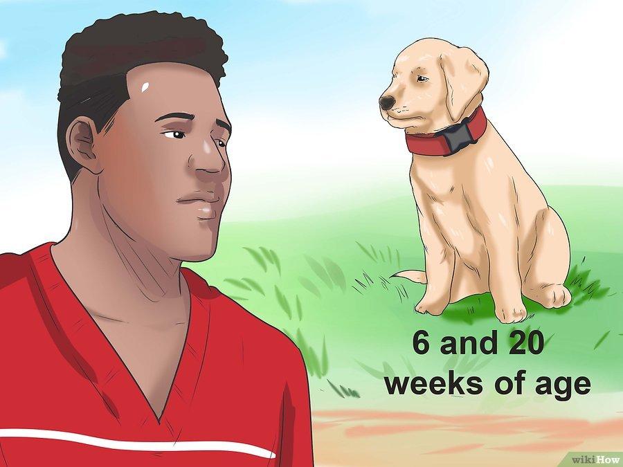 Cách để Nhận biết Bệnh Parvo ở Chó Pet Nha Trang
