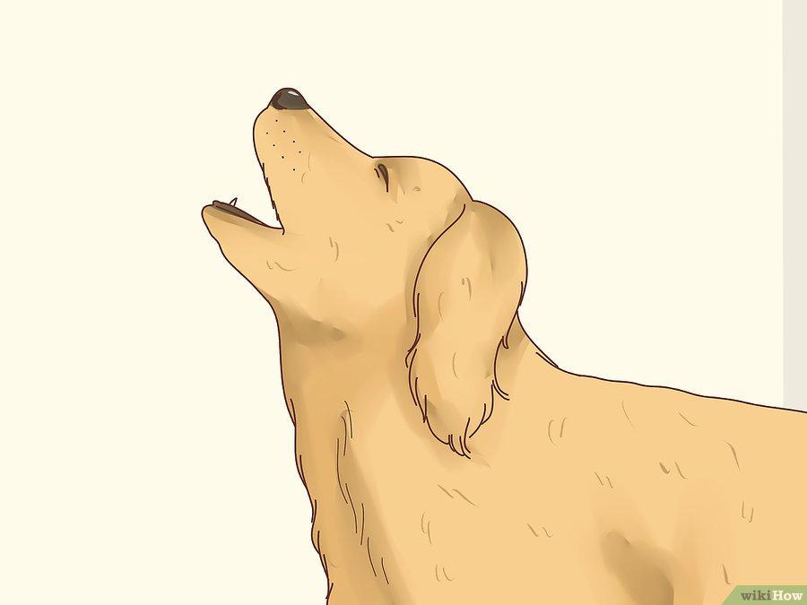 Cách để Nhận biết dấu hiệu động dục ở chó Pet Nha Trang