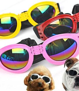 Mắt Kính Thời Trang Cho Chó Pet Nha Trang