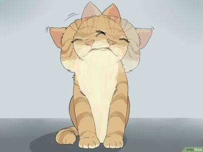 Cách Vệ Sinh Tai Cho Mèo Pet Nha Trang