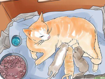 Cách Để Giúp Mèo Sinh Con Pet Nha Trang