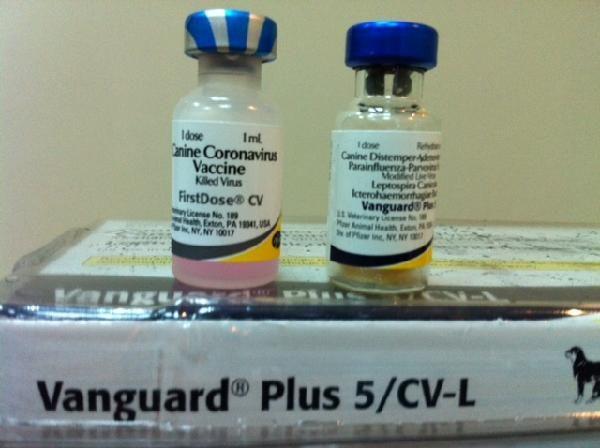 Vaccine cho chó 7 bệnh Vanguard Plus 5/CV-L